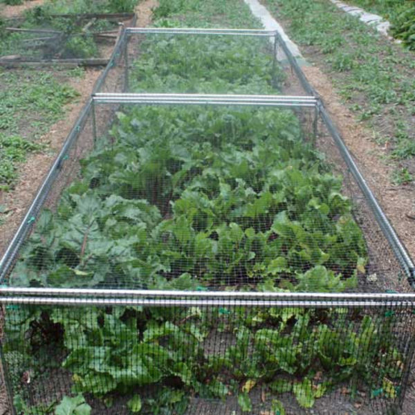 1' 6 High x 4 Wide Fruit Cage Green